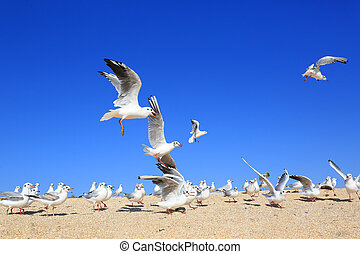 flock of young seagulls over snady seashore