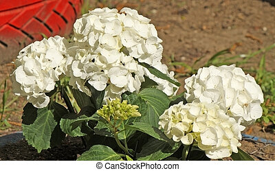 A flower bed of spring white flowers