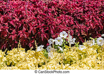 A flower bed with colorful flowers on it.