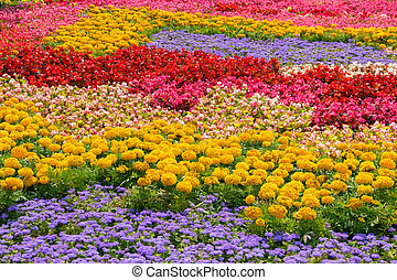 A flower bed with colorful flowers