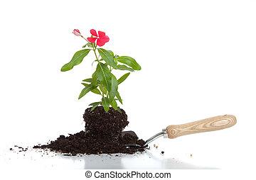 A flower in soil on a spade
