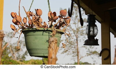 A flower pot and trees - A medium shot of a pot hanged on...