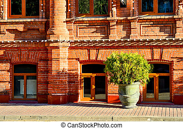 A flower pot with a bush of a tree stands at the red brick wall of an old house
