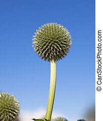 a flower with blue sky