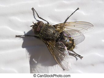 fly - a fly macro