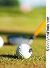 a fly on golf ball