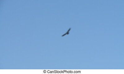 A flying bird - A low angle shot of a bird flying and...