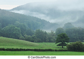 Ardennes - A foggy landscape of the Ardennes near Stavelot, ...