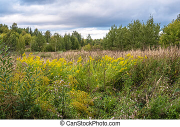 A forest glade with yellow flowers and tall dry grass.