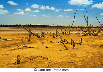 A Forest of Dead Trees