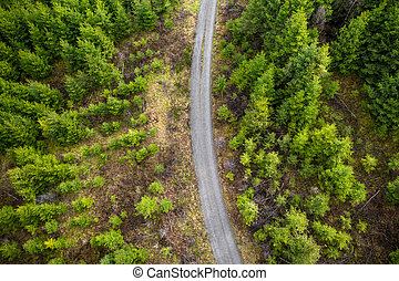 a forest path in a needle forest from above