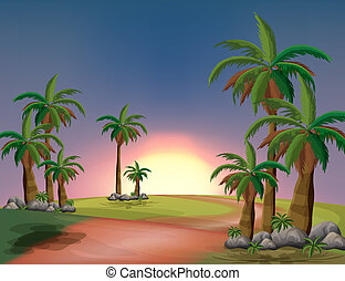 A forest with palm trees