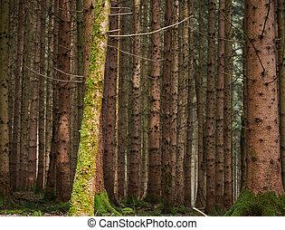 a, foto, von, der, wald, mit, viele, bäume, und, moos