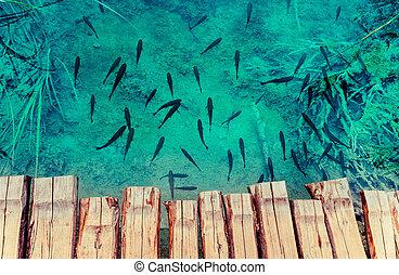 a, foto, von, fische, schwimmender, in, a, see, genommen, in, der, nationalpark, plitvice, kroatien