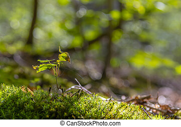 a fresh branch with green leaves in the forest
