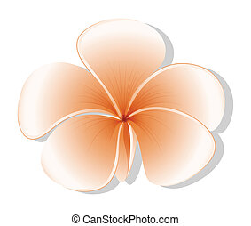 Illustration of a fresh five-petal flower on a white background
