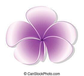 A fresh five-petal flowering plant