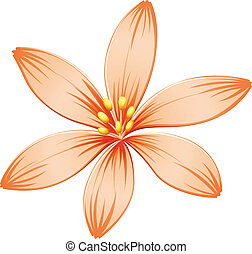 A fresh five-petal orange flower