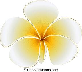 A fresh flower