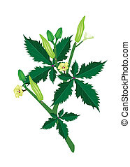 A Fresh Okra Plant on White Background - Vegetable and Herb...