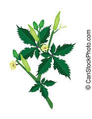 A Fresh Okra Plant on White Background