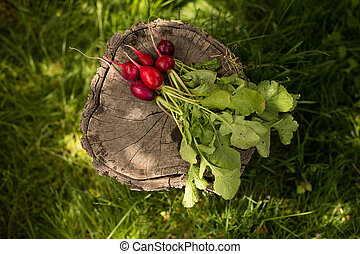 A fresh, spring, organic, red bunch of radishes with tops and green leaves. Fresh vegetables arranged on a green grass background.