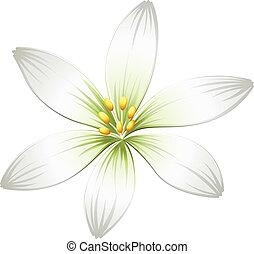 A fresh white flower