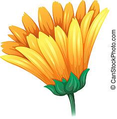 A fresh yellow flower