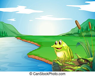 Illustration of a frog at the riverbank