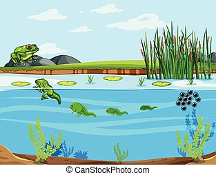 A frog life cycle