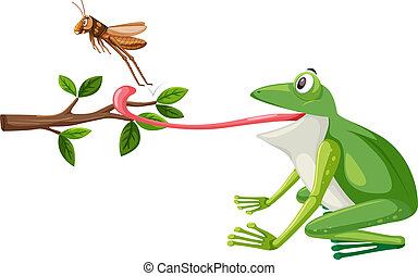 A frog try to eat grasshopper illustration