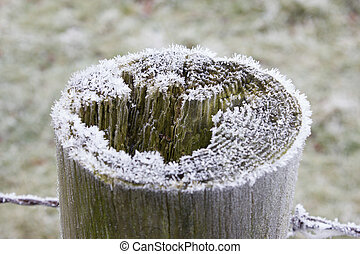 A Frosty Fence Post