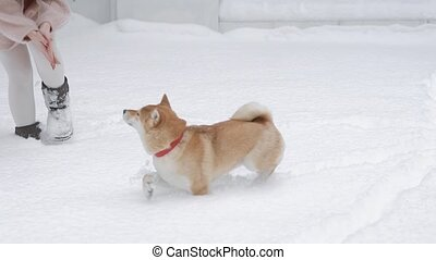 a funny and playful dog plays in a winter park with her...