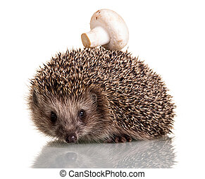 A funny little hedgehog with mushroom on the thorns, isolated on white