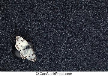 A garden butterfly in a zen garden with relaxing black stones