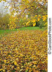 A garden full of yellow leaves on the grass.