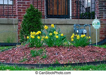 A Garden In a Front Yard in Suburban Pennyslvania With Yellow Flowers