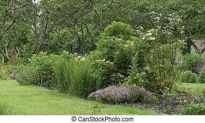 A Garden Plot In Yard - Steady, medium wide shot of a garden...