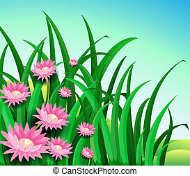 A garden with daisy flowers