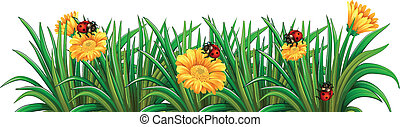 A garden with ladybugs