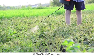 Gardener sprays pesticides on potato leaves