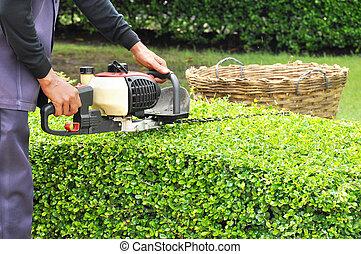 A gardener trimming hedge with trimmer machine - Gardener...