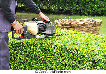 A gardener trimming hedge with trimmer machine - Gardener...