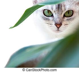 a, gato, olhos
