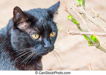 a, gato preto
