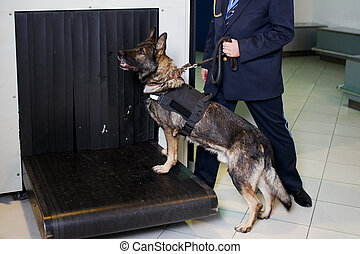 A German shepherd dog for drug detection check in the baggage rolling band with custom officer at the airport. Horizontal view.