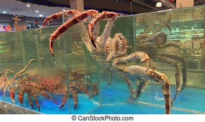 A giant crab tries to escape the aquarium. Close up