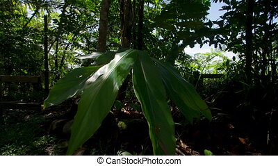 A giant leaf medium shot - A dolly shot tilting upward to...