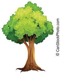 A giant tree