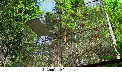 A gibbon monkey shelter. monkey rehabilitation center.